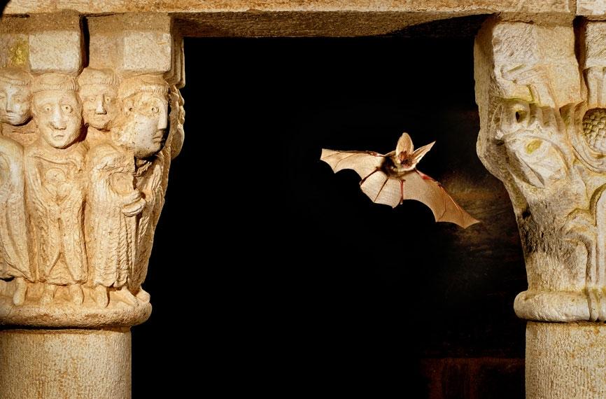 Bat Tune